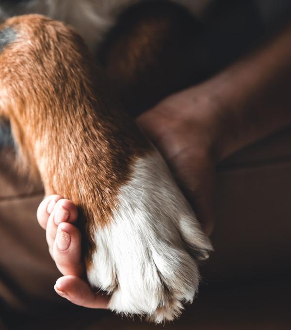 Patte d'un chien dans main d'une personne. Cette image représente le respect. Clinique vétérinaire Lachine