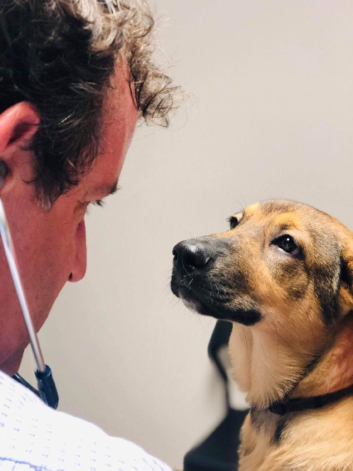 Portrait du Dr. Bruno Ouimet et un chien se regardant dans les yeux. Clinique vétérinaire Lachine
